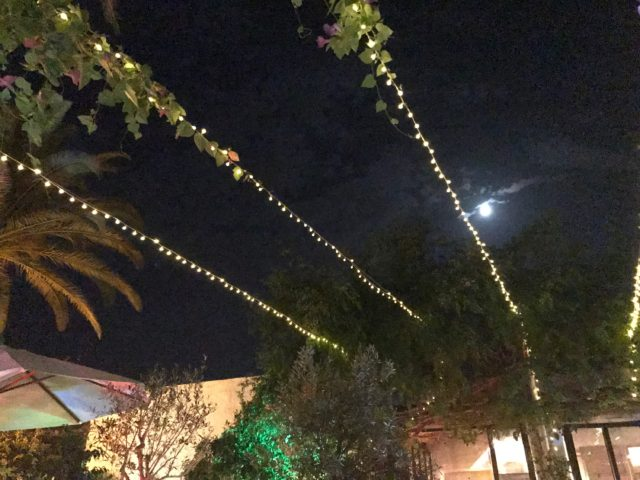 String Of Light Bulbs Between Trees In A Restaruant