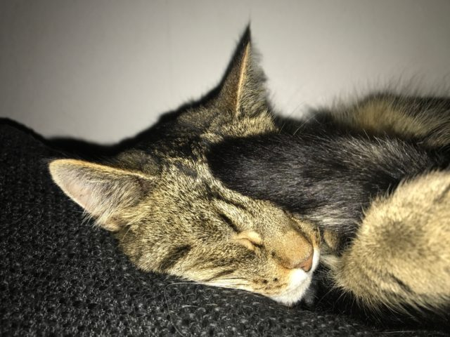 Sleeping Cat With Tail On Its Head
