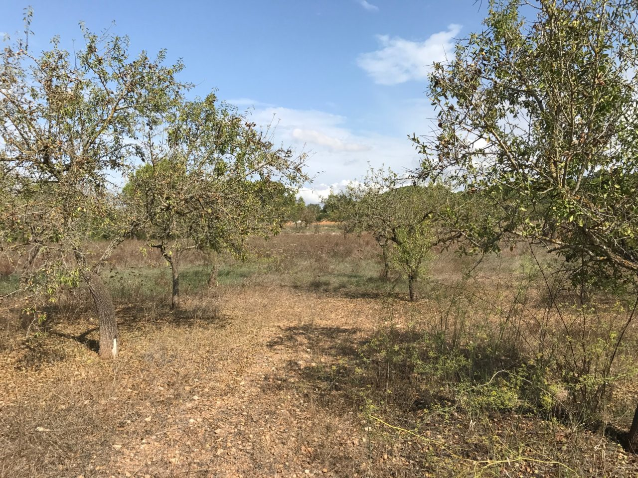 Urban Property Plot With Dry Grass And Trees