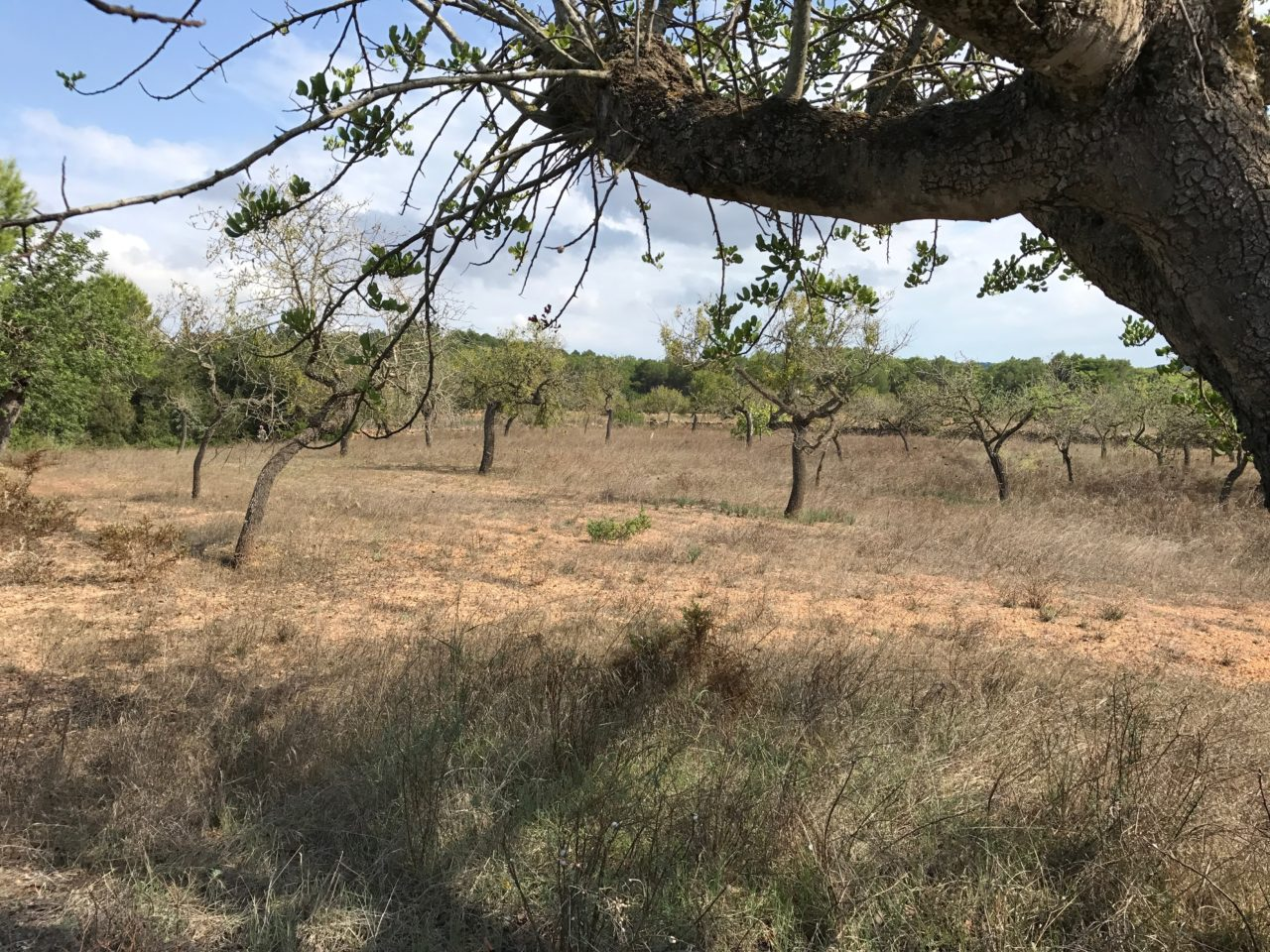 Urban Orchard With Dry Grass And Trees