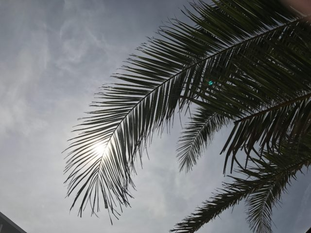 A Palm Tree From Below With The Sky With Thin Clouds And Shaded Sun In The Background In Spain