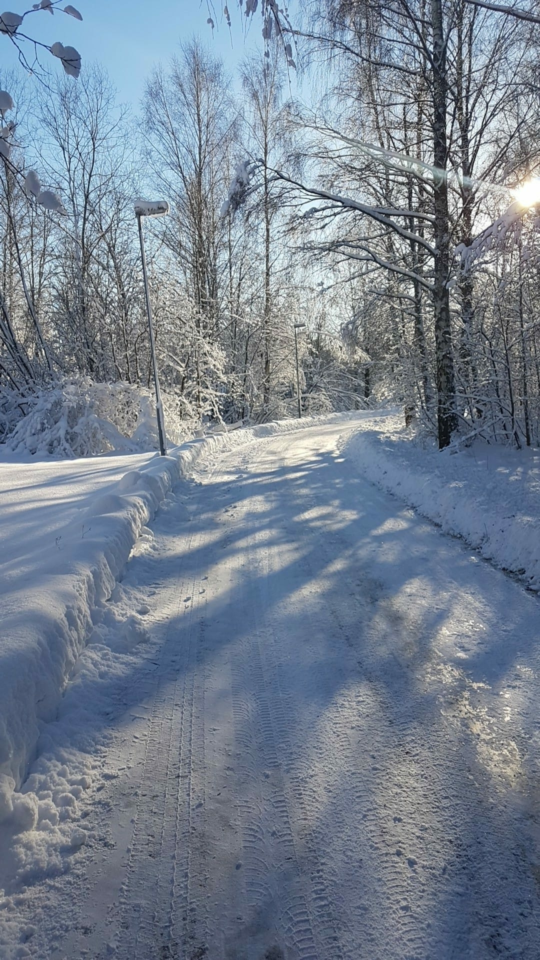 Snowy Winter Road With Clear Blue Sky and Snowy Trees