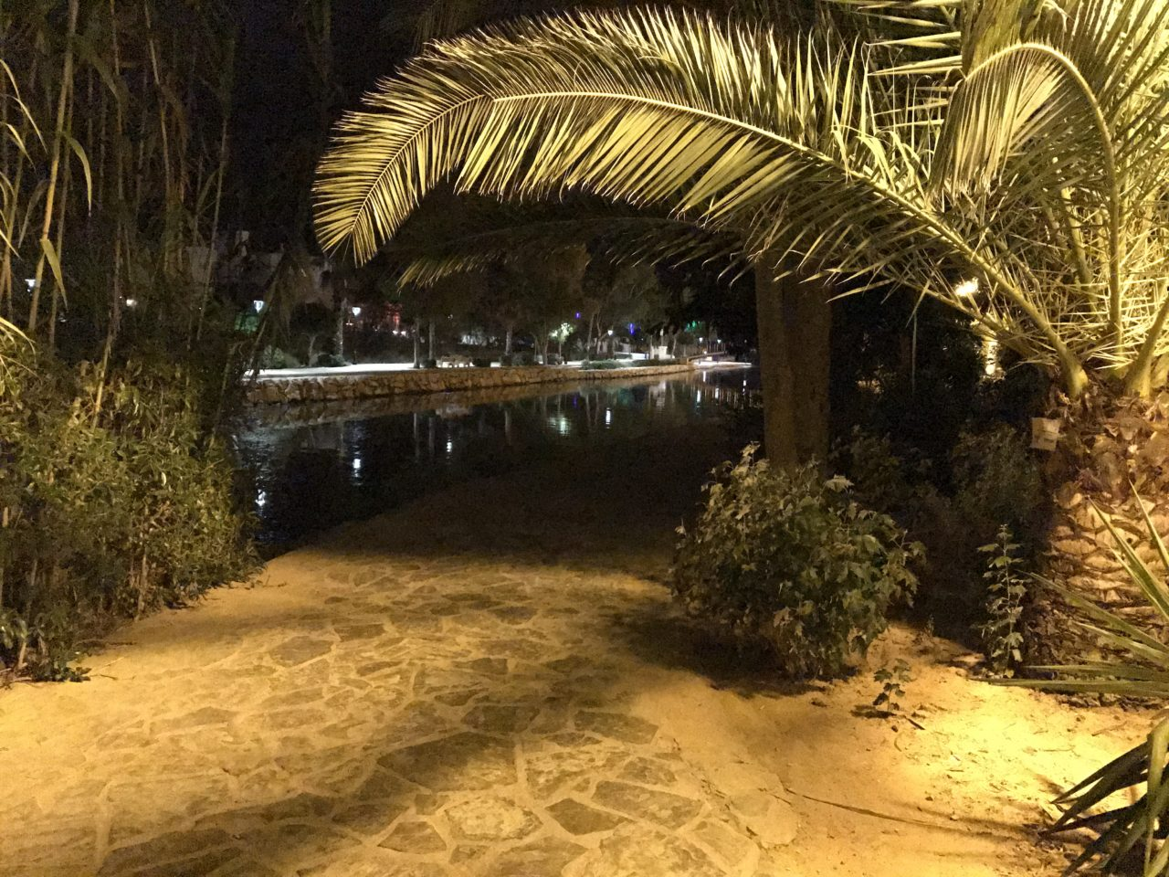 River Walkway In Ibiza With A Palm Tree Leaf Hanging Down