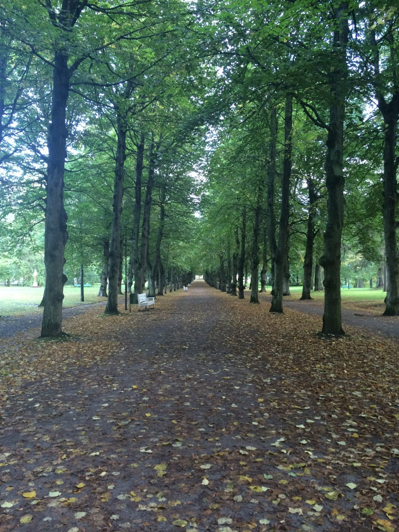 City Park With Long Avenue With Tall Trees On The Sides With Yellow Leaves On The Gravel