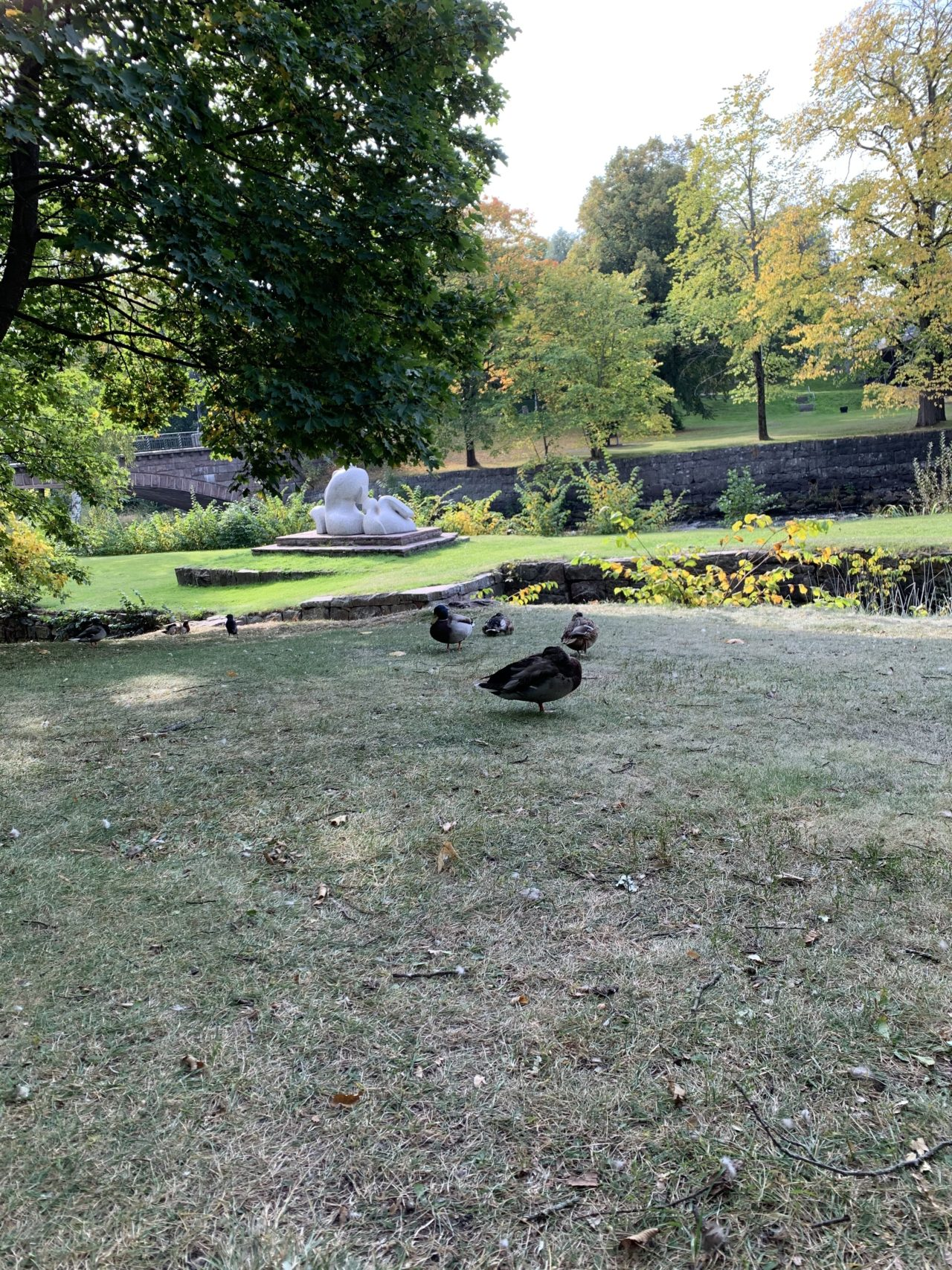 Ducks Stand Together In A Park In The Autumn