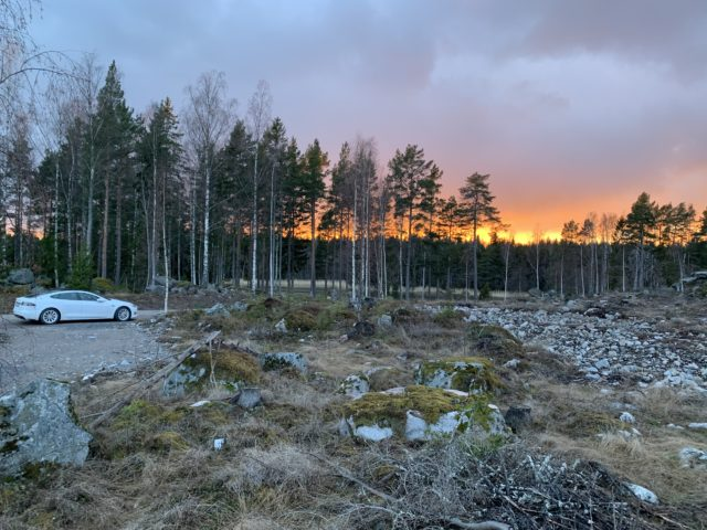 Forest Sunset In The Evening With A Tesla