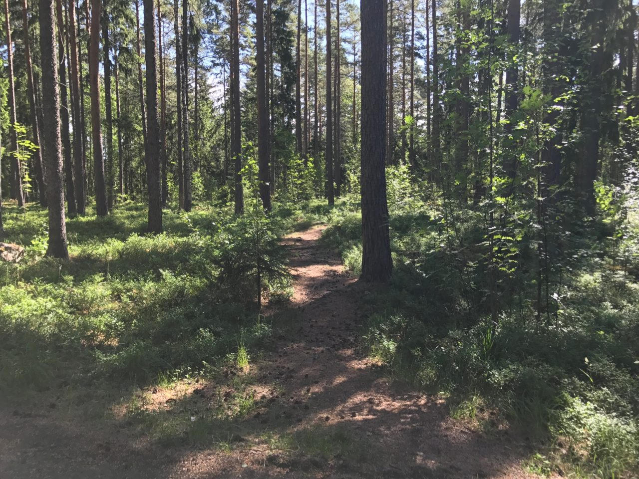 Forest Walkway Path With Bushes And Trees