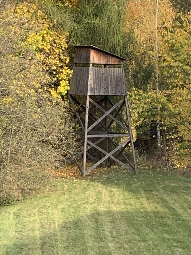 Hunting Tower In The Woods In Fall