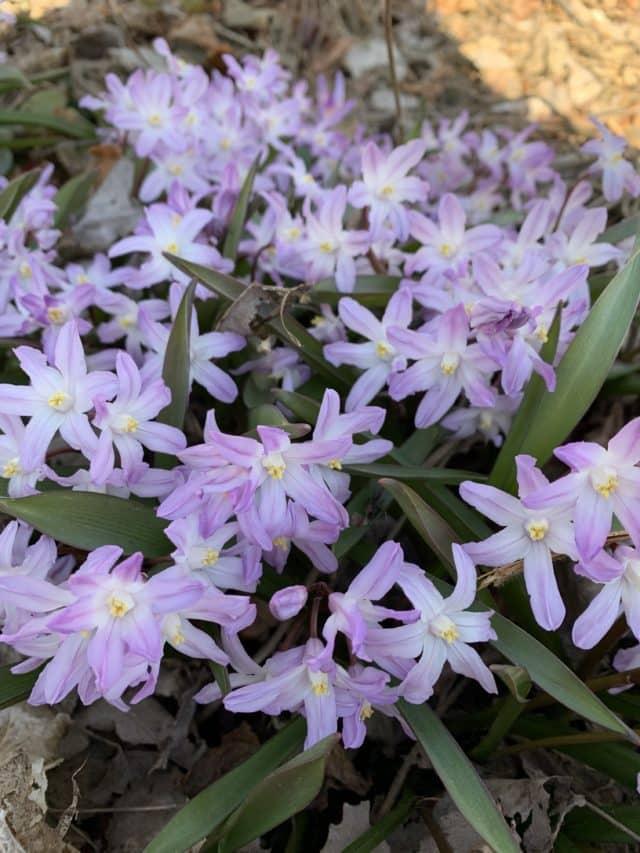 Purple Flowers Grown In A Garden