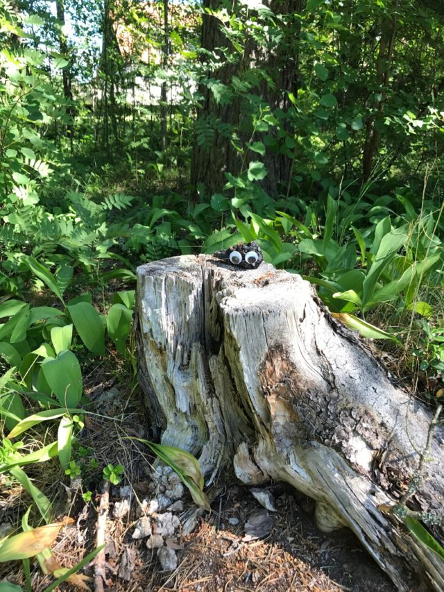 Tree Stump In The Forest With Googly Eyes